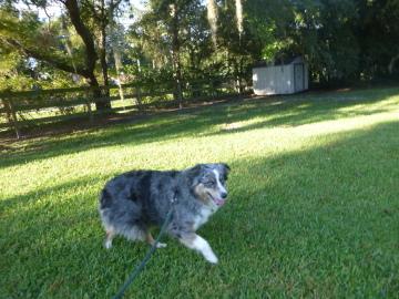 Sheldegren Pet Resort Amp Salon Dog Boarding